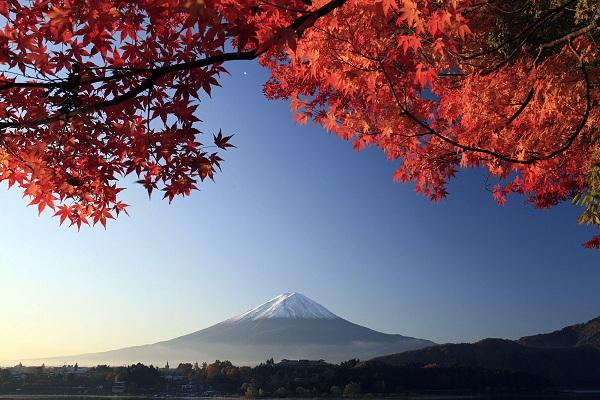 日本:伊豆4天3晚2场球  东京往返伊豆半岛 私人订制之旅